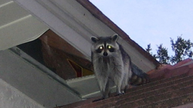 Photo of Keep Wildlife Out of Your Home