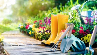 Photo of How to Select the Best Gardeners in Dubai