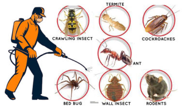 Photo of Three Important Habits to Practice to Keep your Home Pest-Free Amid the Pandemic