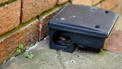 Photo of How To Get Rid Of Rats From Your Drainage System?
